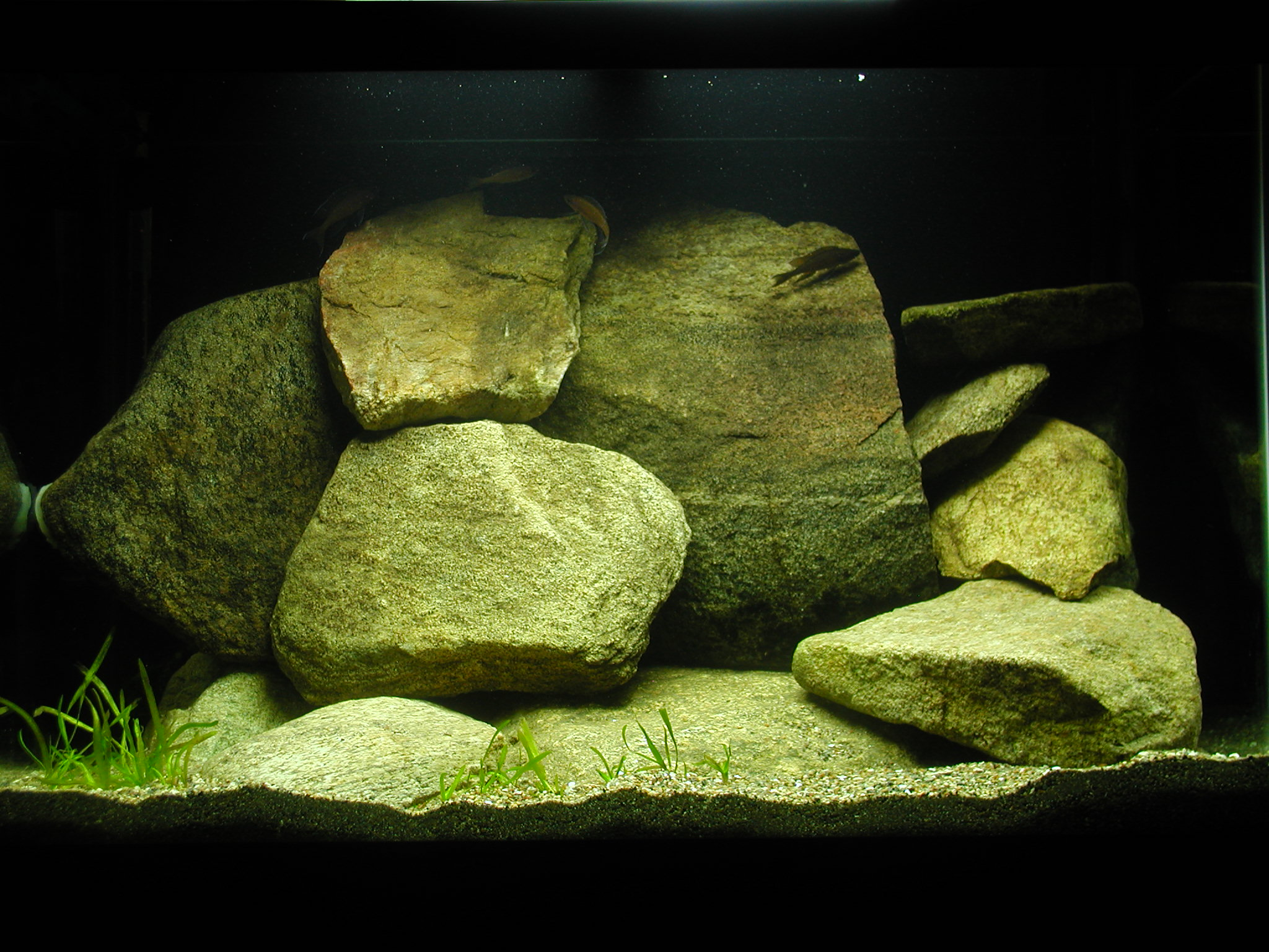 65 Gal FTS  with Paracyps 12-10-09.JPG