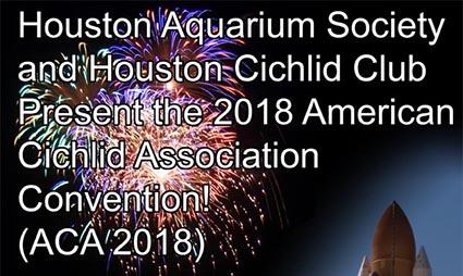 american cichlid association