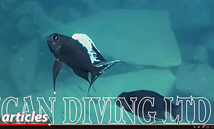 african diving