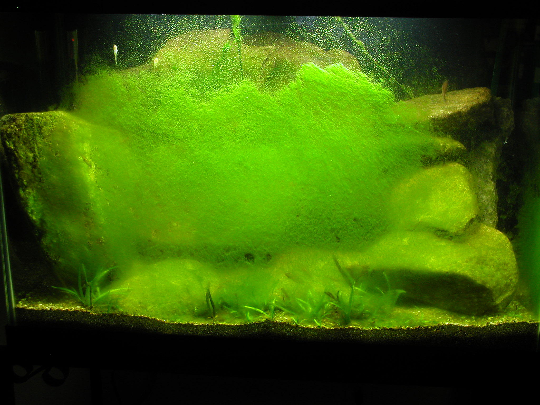 Algae before scraping.JPG