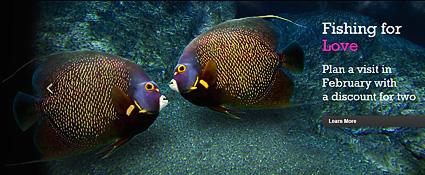 Aquariums attendance