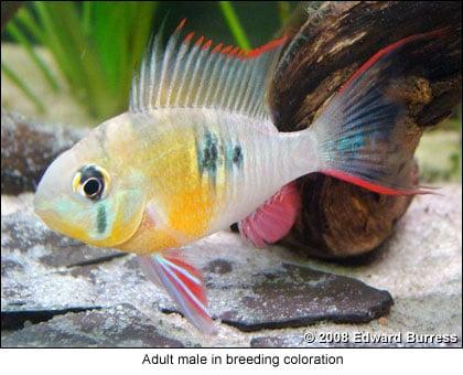 quarantaine et poisson test - Page 2 Art_breed_micro01