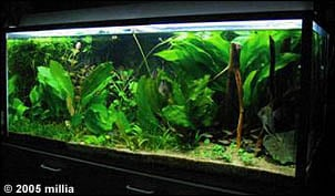 Carbon Dioxide in Planted Freshwater Aquaria