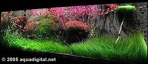 An Introduction To Aquarium Plants