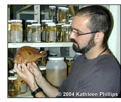 Hernan Lopez-Fernandez looks at a Geophagus winemilleri specimen in his lab at Texas A&M University.