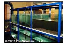 Newly-built aquaria af FIRI will be used for display, education, and captive breeding efforts.