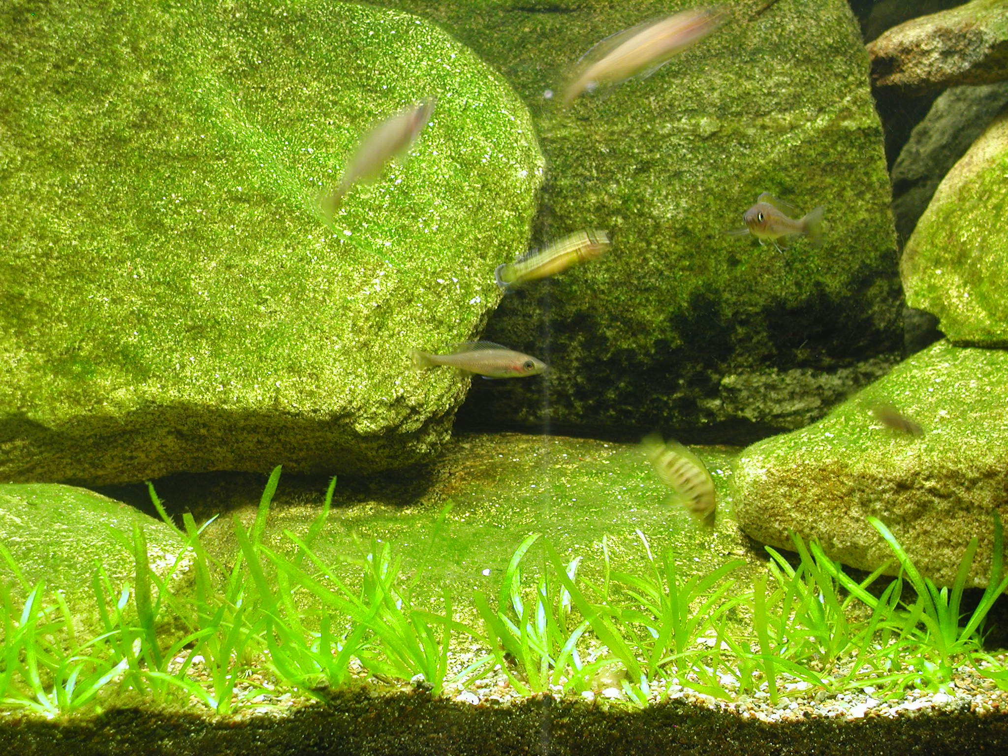 Center of the tank.JPG