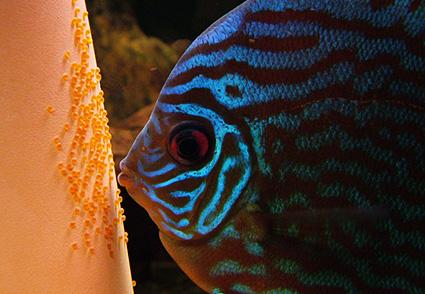 fish intelligence