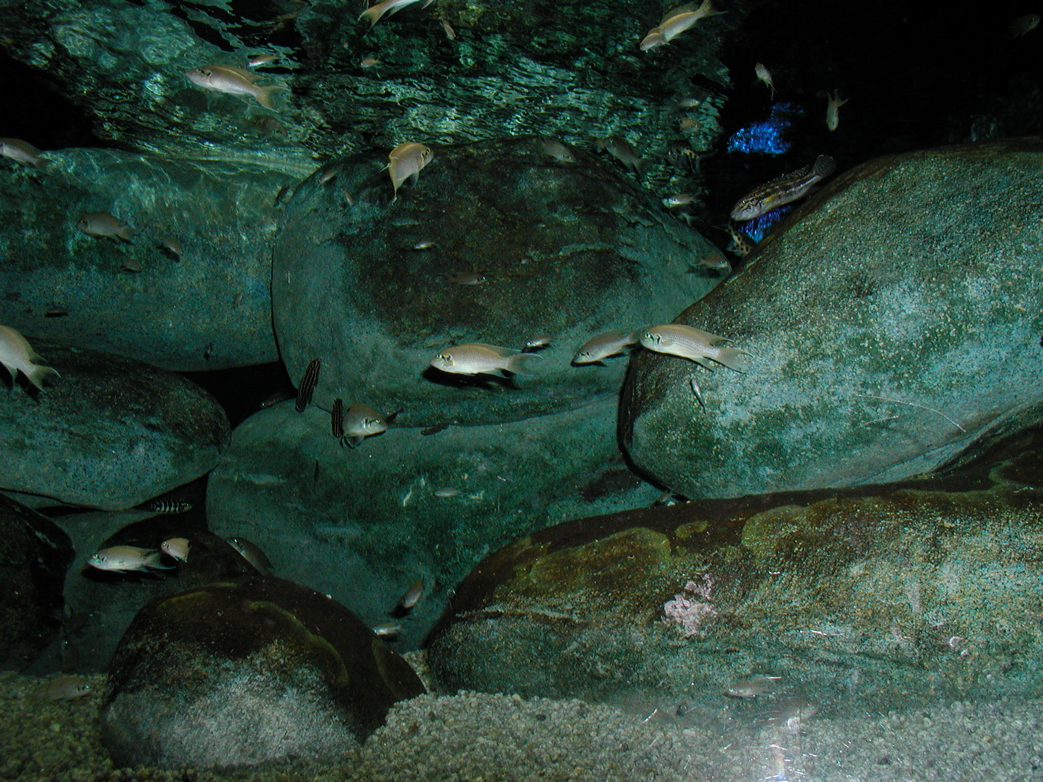 Fish from Baltimore Aquarium 1.JPG