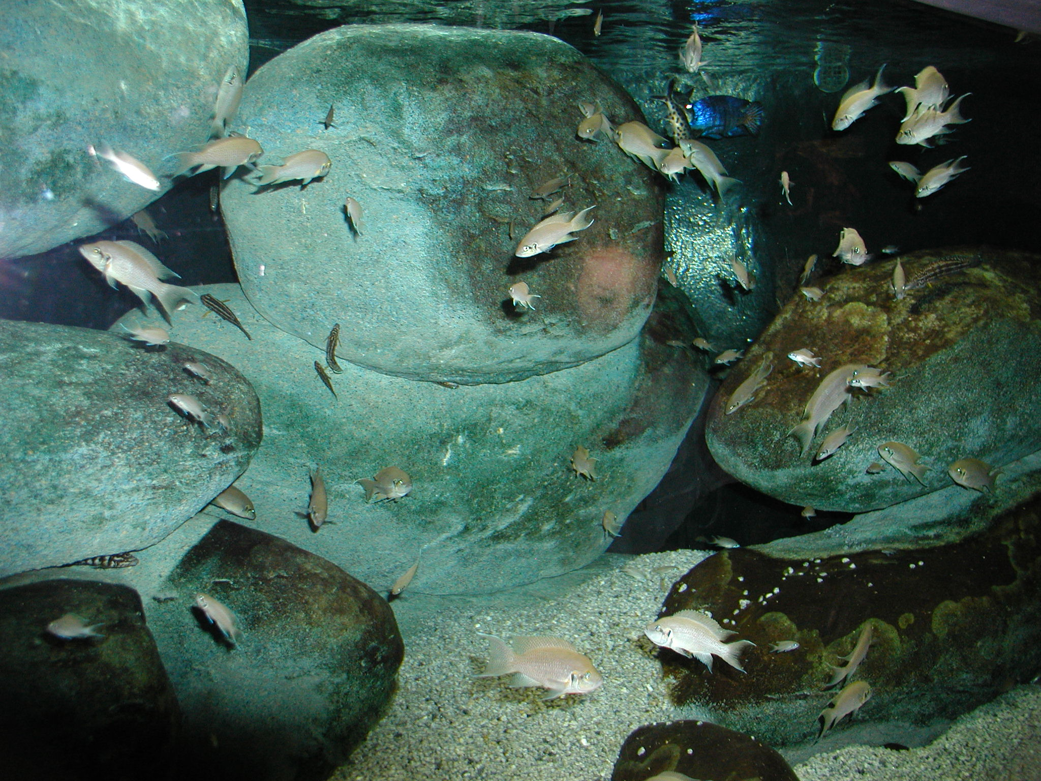 Fish from Baltimore Aquarium 2.JPG