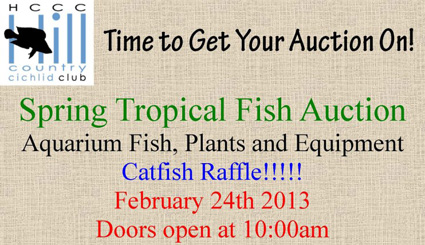 Hill Country Cichlid Club Auction