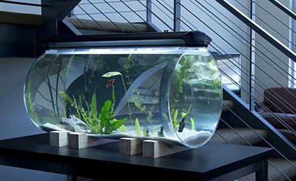 isis aquarium