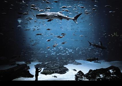Aquarium Photography