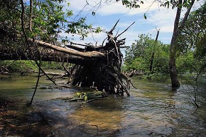Tapajos River