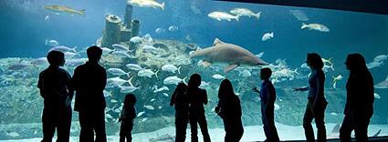 North Carolina Aquarium seeking volunteers