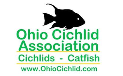ohio cichlid association