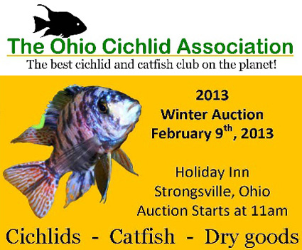 Ohio Cichlid Association Winter Auction