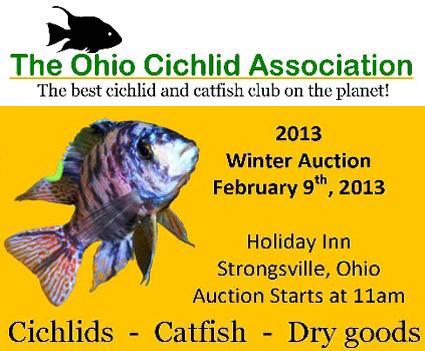 Ohio Cichlid Association Winter Auction
