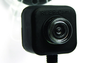 reef-cam live