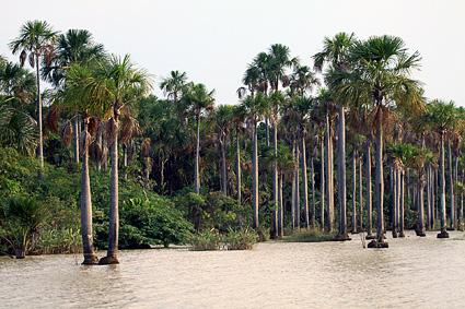 Protected wetland