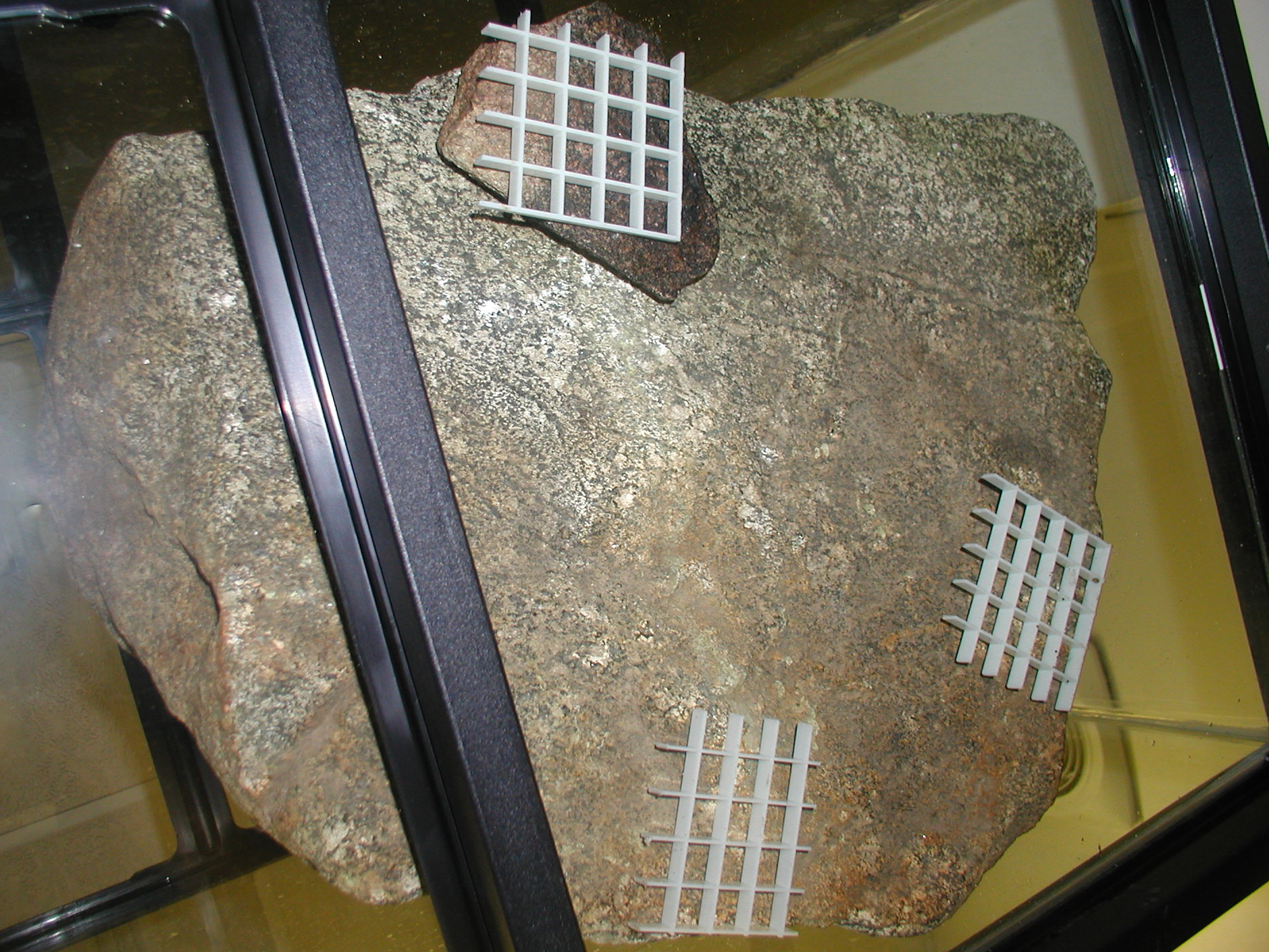 Underside of rock.JPG